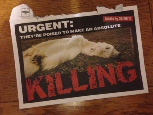 GreenPeace mailing with an image of polar bear on front of envelope